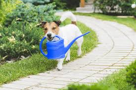 dog-holding-watering-can